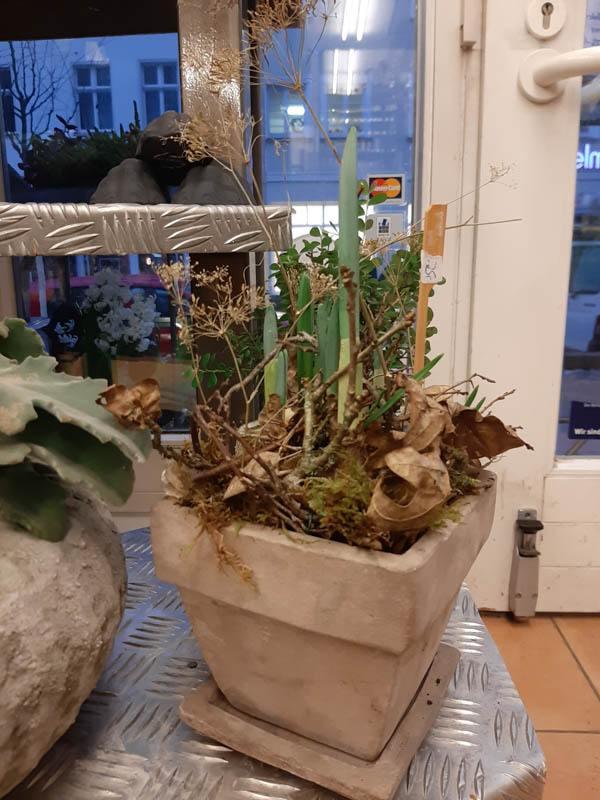 pflanzen-deko-laufstegstrausberg-04